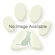 Sable&White  Rough Collie Listing Image